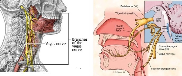 Acupuncture in the Glossopharyngeal Neuralgia and Hemi ...